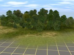 Listnaté stromy II
