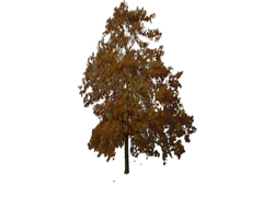 Strom s animací padajícího listí.