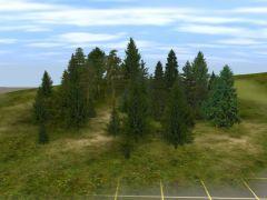 Jehličnaté stromy