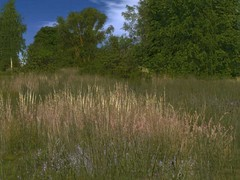 Sada trávy