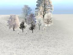 Zimní stromy a keře.