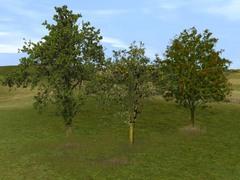 Sada stromů 2.