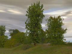 Sada stromů 3